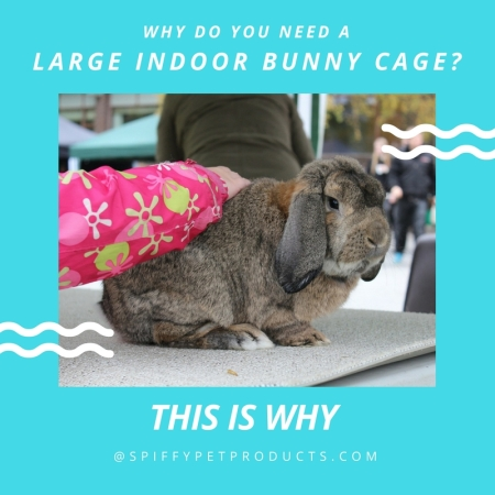 Why you need a large indoor bunny cage.